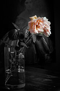 Flower Still Life Prints Framed Prints - The Rose Grew Pale And Left Her Cheek Framed Print by Theresa Tahara