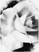 Leslie Hunziker - The Rose