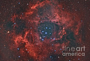 Molecular Clouds Prints - The Rosette Nebula Print by Reinhold Wittich