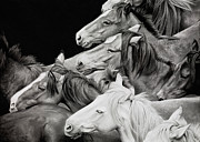 Wild Horses Drawings - The Run Out of Carson City by Jennifer Fox