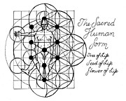 Sacred Geometry Drawings Posters - The Sacred Human Form Poster by Stephen Bower