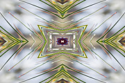 Pine Needles Photos - The Sacred Pine Mandala Yantra by Marie Jamieson