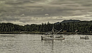 Timothy Latta - The Salmon fishing fleet...