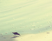 Beach Photography Art - The Sandpiper by Amy Tyler