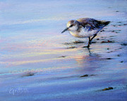 Coastal Birds Pastels Framed Prints - The Sandpiper Framed Print by Laura Griffith
