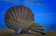 Old Shell Posters - The Scallop Poster by Chris Thaxter