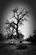 Susan  Akerson Hamel - The scary Tree