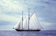 George Cousins Prints - The Schooner Bluenose 2 Again Print by George Cousins
