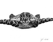 Reptiles Drawings Prints - The Sea Traveler Print by J Ferwerda