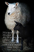 Farm Yard Posters - The Sheep of His Pasture Poster by Stephanie Frey