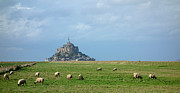 France Posters - The Sheep of Mont Saint Michel Poster by Olivier Le Queinec