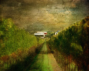 Napa Valley Vineyard Prints - The Shortcut Home Print by Karen  Burns