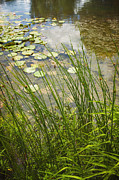 Lilly Pond Photos - The Side of the Lily Pond by Margie Hurwich