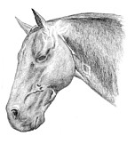 Stable Drawings - The Silent One by J M L Patty