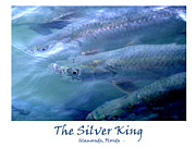 Flyfishing Prints - The Silver King Print by Ken Reardon