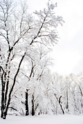 Snow Scenes Metal Prints - The Skier Metal Print by Emily Stauring