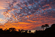 Palmetto Trees Posters - The Sky is Burning Poster by Walt  Baker