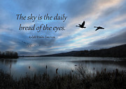 Geese Digital Art Posters - The Sky Poster by Lori Deiter