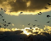 Starlings Metal Prints - The Sky Opened Metal Print by Gothicolors And Crows