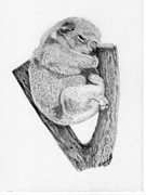 Koala Drawings Posters - The Sleeper Poster by Wendy Brunell