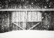 Pennsylvania Barns Prints - The Snowy Barn II Print by Lisa Russo