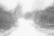 Gary Heller Metal Prints - The Snowy Winter Path Metal Print by Gary Heller