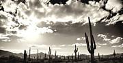 An  Pham - The Sonoran Desert