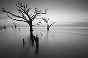Dead Trees Prints - The Sound of Silence Print by Bernard Chen