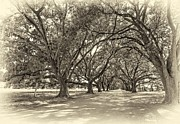Evergreen Plantation Photo Framed Prints - The Southern Way sepia Framed Print by Steve Harrington