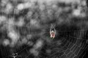 Mary Lee Dereske - The Spider
