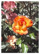 Planter Posters - The Spring Rose Poster by Glenn McCarthy Art and Photography