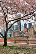 Park Benches Photos - The Spring Skyline by JC Findley