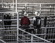 Bull Riders Prints - The Stare-Off Begins Print by Amber Kresge