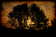 Frederico Borges Photo Framed Prints - The sun behind the tree Framed Print by Frederico Borges
