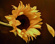 Graciela Castro - The sunflower and the...