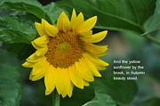 Lisa  DiFruscio - The Sunflower Quote