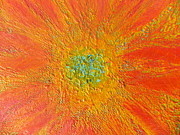 The Sun's Flower Print by Amy Drago