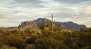 The Superstitions Prints - The Superstition Mountains Print by Saija  Lehtonen