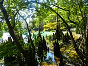 Cypress Knees Photos - The Swamp by the Springs by Julie Dant