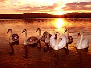 Joe Cashin - The Swan Family