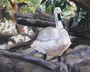 Swans... Drawings - The Swan by Lori Brackett