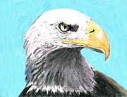 Eagles Drawings - The Symbol of North America by Stephanie Davis