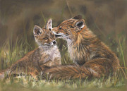 Fox Pastels Prints - The Tender Nudge Print by Terry Kirkland Cook