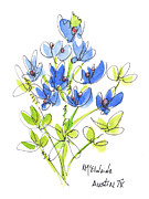 Wild-flower Posters - The Texas Bluebonnet Poster by Kathleen McElwaine