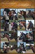 Many Faces Posters - The Thoroughbred Poster by Nichon Thorstrom