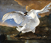 Big Bird Prints - The Threatened Swan Print by Jan Asselyn