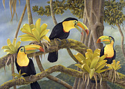 Tropical Rainforest Art - The Three Amigos by Laura Regan