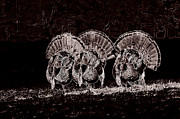 Turkey Jewelry Metal Prints - The Three Amigos Metal Print by Todd Hostetter