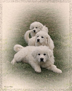Puppies Digital Art - The Three by Bonnie Willis