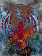 A Posters Digital Art Metal Prints - The Tiger Steel Finish Editoin Metal Print by Justin Moore